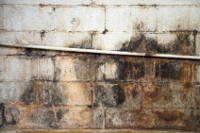 Mold Damage - Mold Clean Up - Mold Restoration
